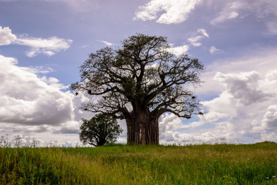 ¿Descubre Nuestro Primer Safarí en Tanzania?