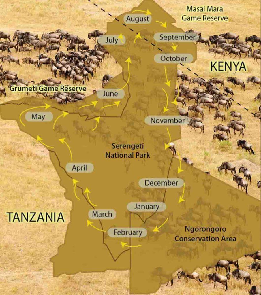 Gran migracion - Agencia viajes Tanzania
