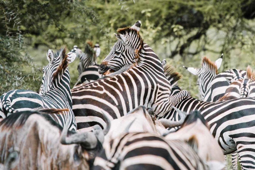 Sáfari Tanzania - Agencia de viajes Africaatumedida - 147Sáfari Tanzania - Agencia de viajes Africaatumedida - 147