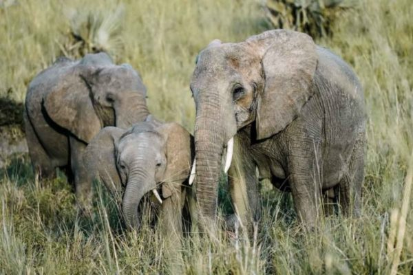 Sáfari Tanzania - Agencia de viajes Africaatumedida - 32
