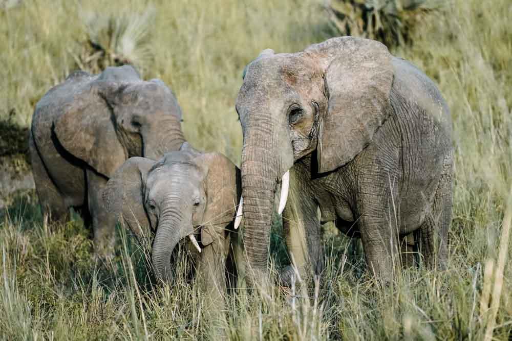 Safari Tanzania - Agencia de viajes Africaatumedida