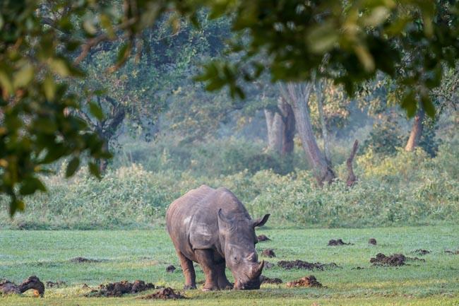 Rinoceronte Negro - Africaatumedida