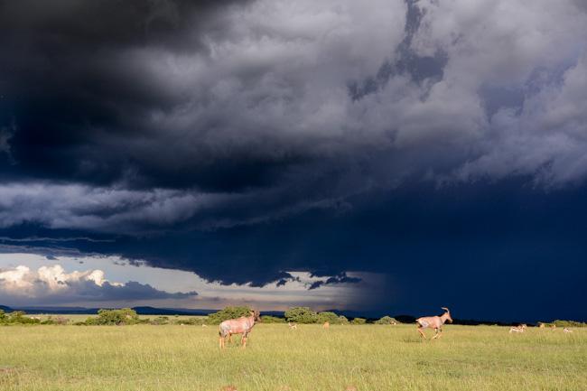 Serengeti - Tanzania - Africaatumedida