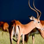 Los 4 parques nacionales principales de Tanzania: Serengueti, Ngorongoro, Tarangire, Manyara
