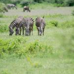 5 razones para viajar a Tanzania - africaatumedida