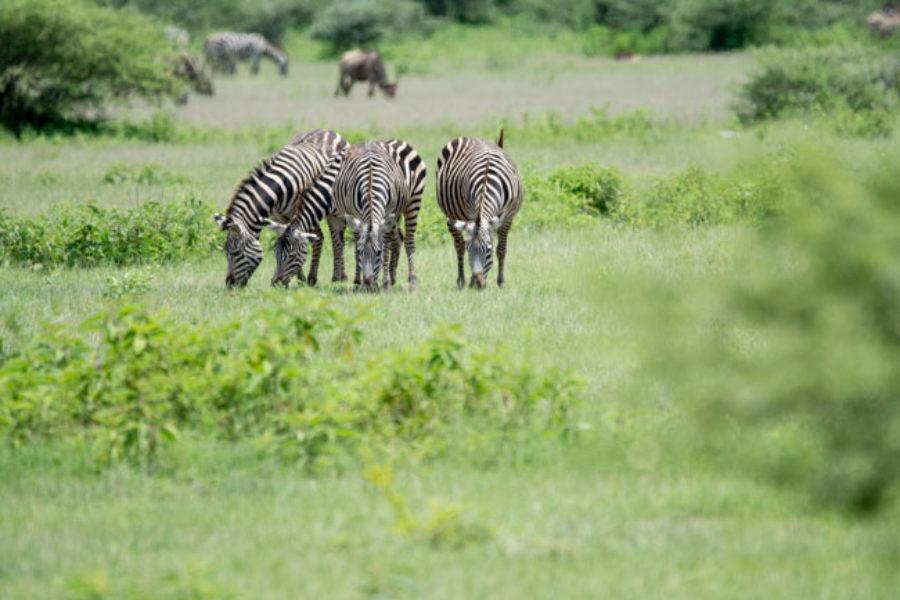 5 razones para viajar a Tanzania