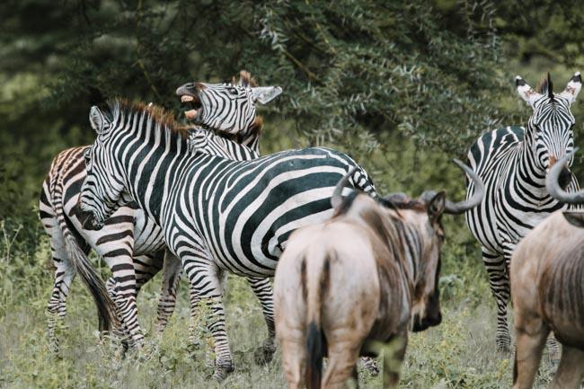 Parque Nacional Lago Manyara - Africaatumedida