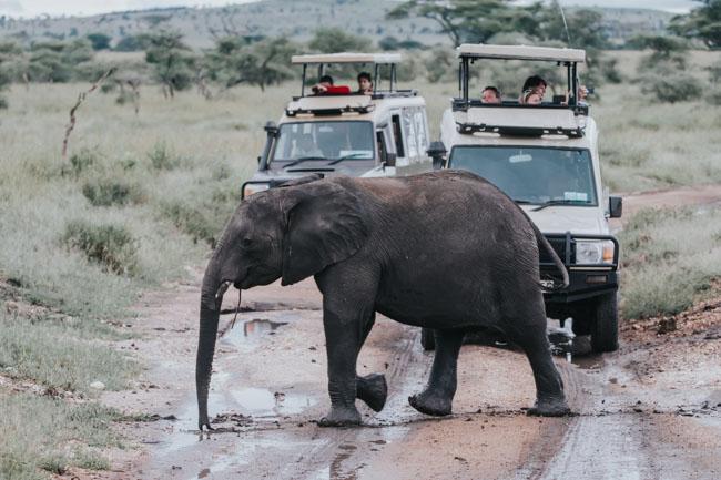Elefante - Tarangire - Africaatumedida