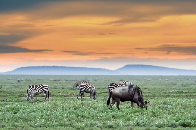 Gran Migracion Ngorongoro - agencia de viajes - Africaatumedida