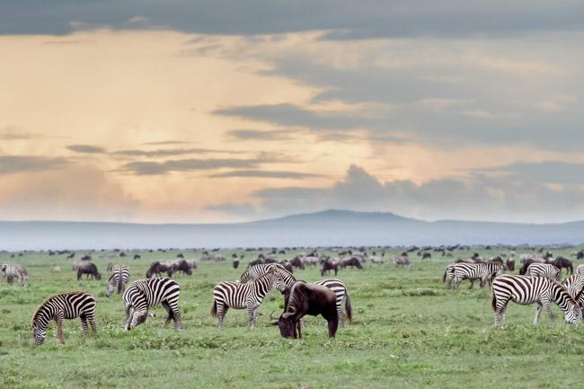 Gran Migracion - Serengeti - Africaatumedida