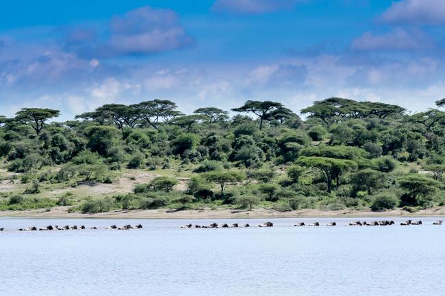 Gran Migracion - Ndutu - Africaatumedida