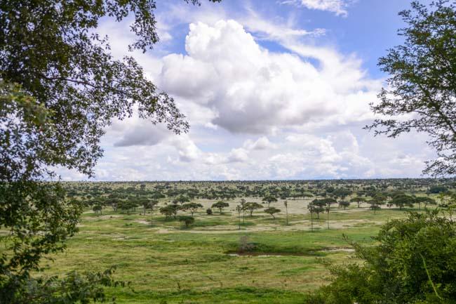 Panoramica Parque Nacional Tarangire
