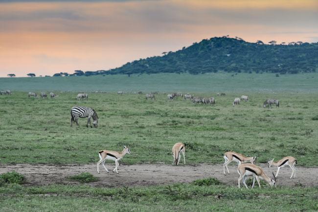 Viaje Africa Ngorongoro Gacela Thomson