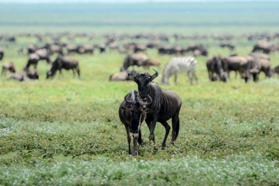 Parque Nacional Amboseli en Kenia