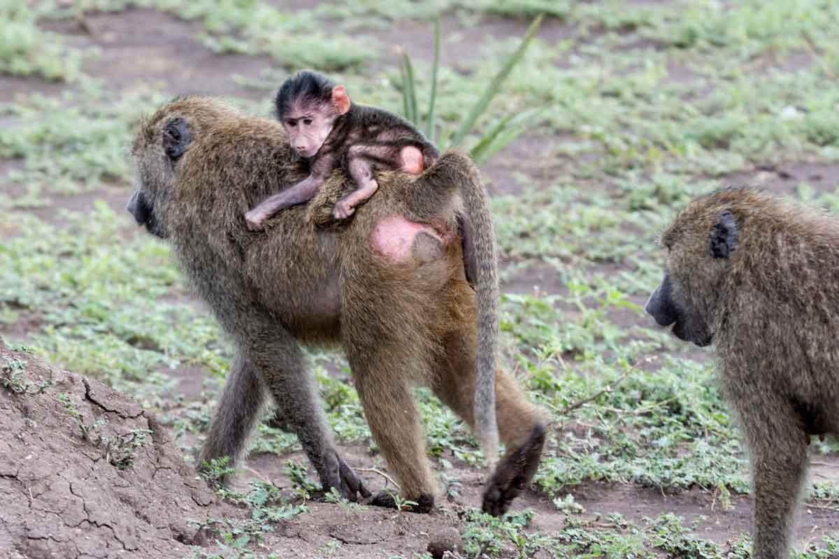 Parque Nacional Nairobi en Kenia