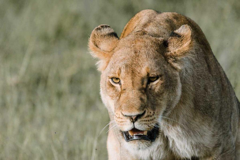 Safari Kenia Samburu - Agencia de viajes Africaatumedida - 165