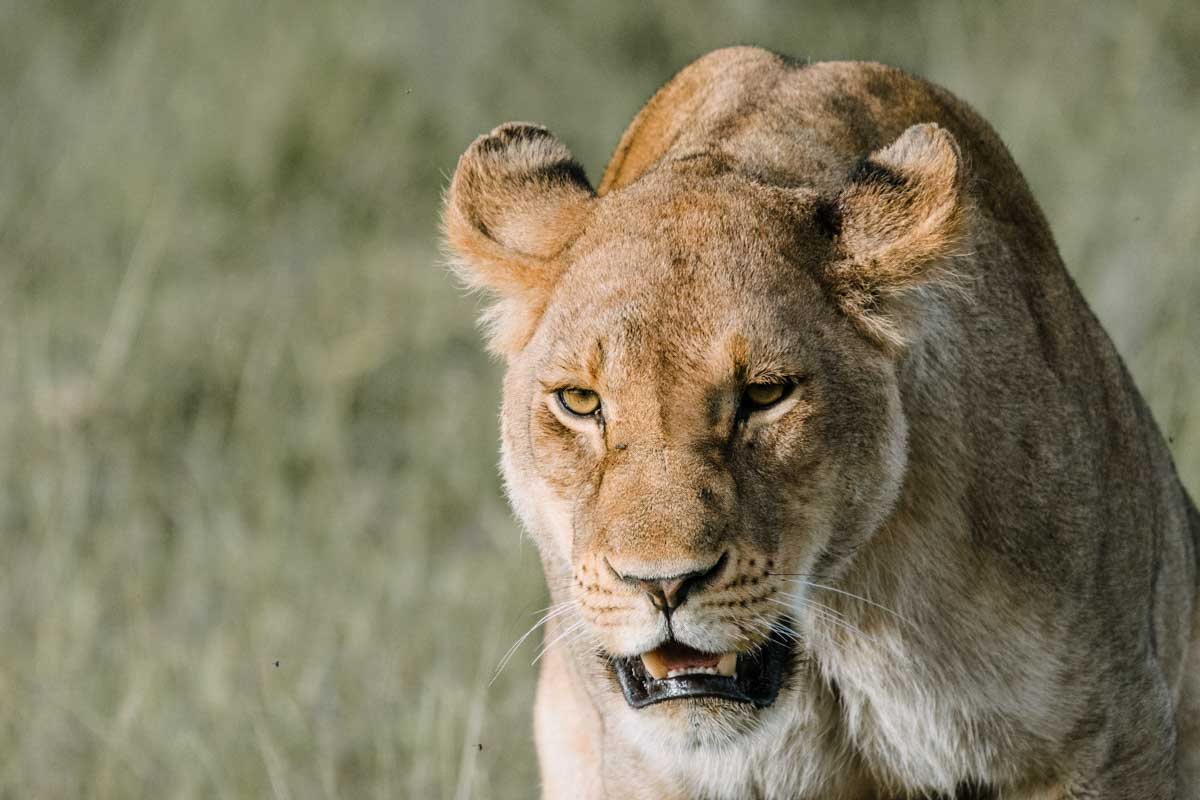 Reserva Nacional Samburu en Kenia