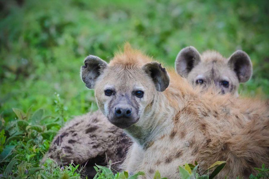 Parque Nacional Tsavo en Kenia