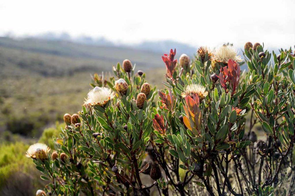 Plantas en Kilimanjaro ruta machame