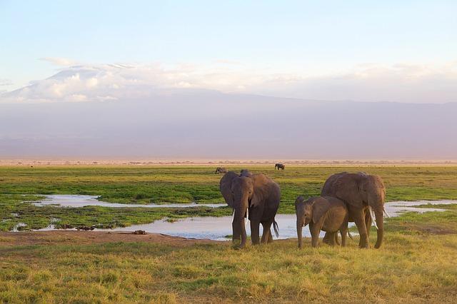 elefante en parque nacional Amboseli