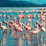 Flamenco en Lago nakuru