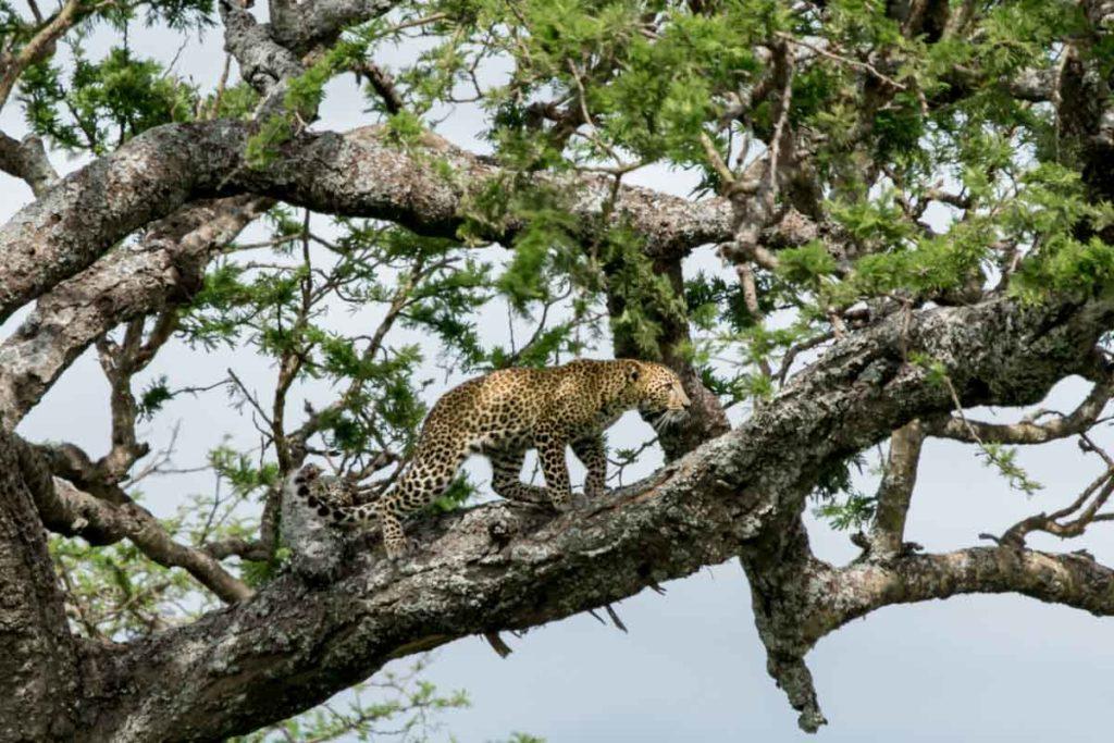 Los principales parques nacionales Kenia