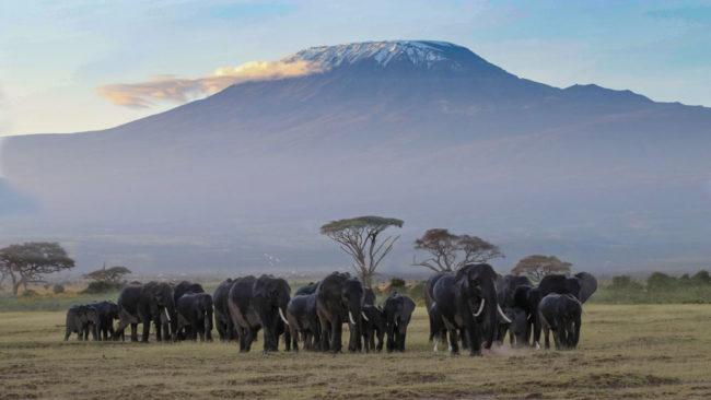 Parque Nacional Amboseli - Agencia de viajes Africaatumedida
