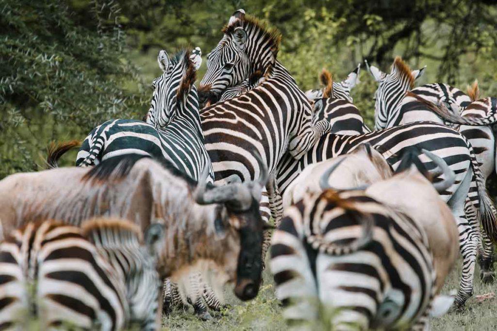 Parque Nacional Tsavo - Agencia de viajes Africaatumedida