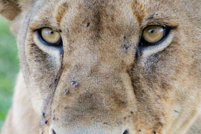 parque nacional samburu - Agencia de viajes Africaatumedida - 562