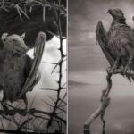Lago Natron en Tanzania animal petrificado