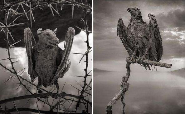 Lago Natron en Tanzania
