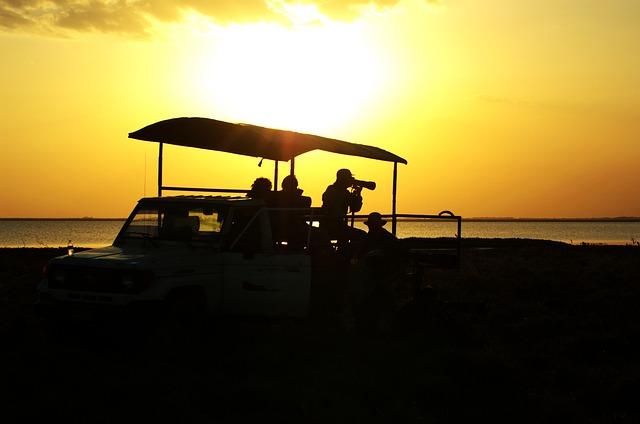 Que equipo de fotografía y vídeo llevar en un safari