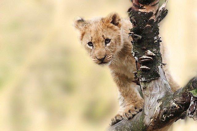 safari leon luna de miel