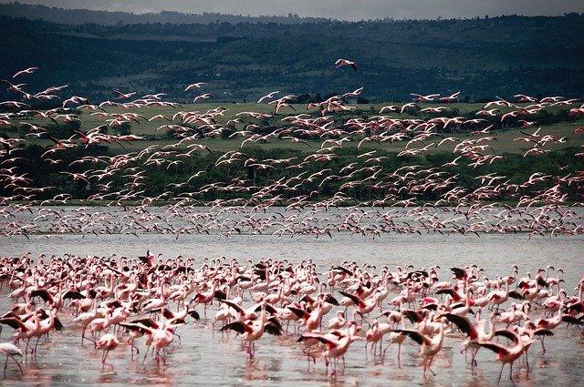 flamencos en kenia y tanzania safari en familia
