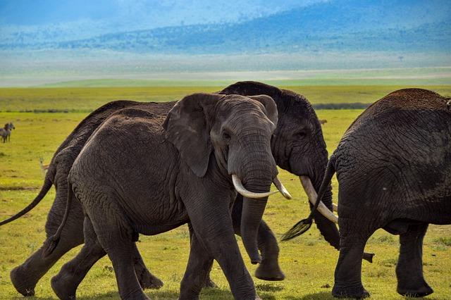 Safari con niños en kenia y tanzania