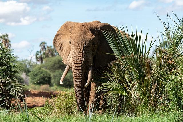 Elefante en Ngorongoro Safari en Grupo