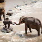 Safari en grupo - elefantes en rio