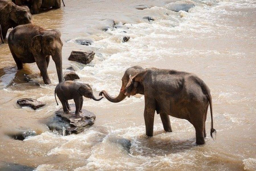 Safaris en Grupo en Kenia y Tanzania