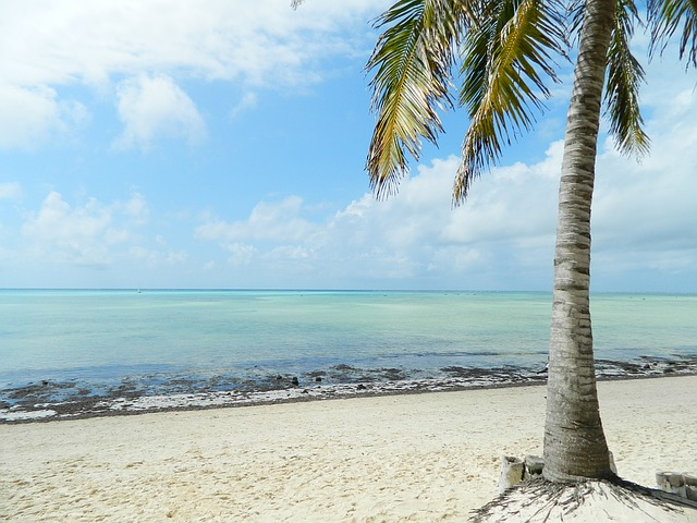 palmera en playa kenia