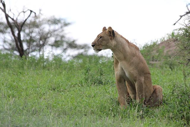 Reserva Masai Mara safari en familia