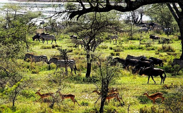 Parque Nacional Tanzania