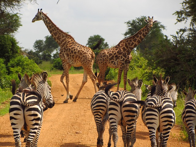 Serengeti safari en familia